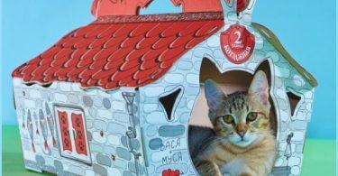 Cartone gatto di casa