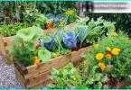 giardino di ghiaia con le proprie mani - come è possibile utilizzare la ghiaia nel giardino