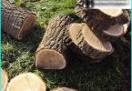 Lawn Care: pettinatura, aerazione, concimazione, pacciamatura, falciatura