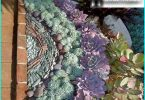 Stone Rose (giovani) come elemento decorativo del giardino: semina e cura