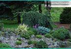 Juniper: piantagione e manutenzione regole, la scelta delle varietà