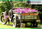 Come fare una carriola giardino con le proprie mani: dal disegno all'installazione