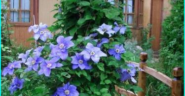 Come scegliere un trituratore giardino - che uno è migliore e perché?