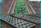 motopompa per irrigazione del giardino: come scegliere una buona macchina?