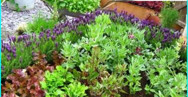 Come fare un giardino in una bottiglia: una master class sul dispositivo florariuma